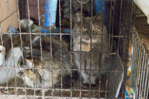 Animal Hoarding and How to Help